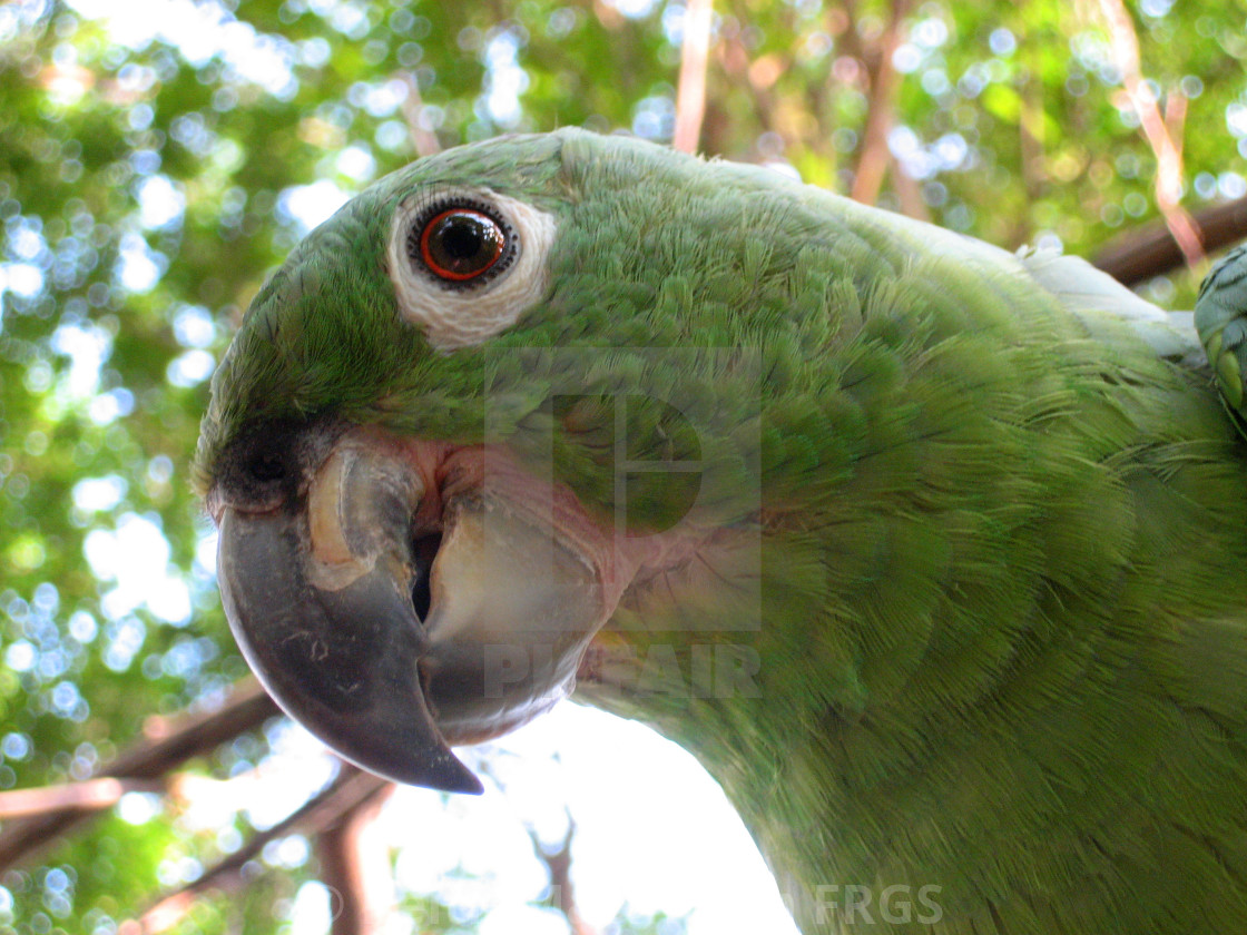 """""""Green Parrot"""" stock image"""