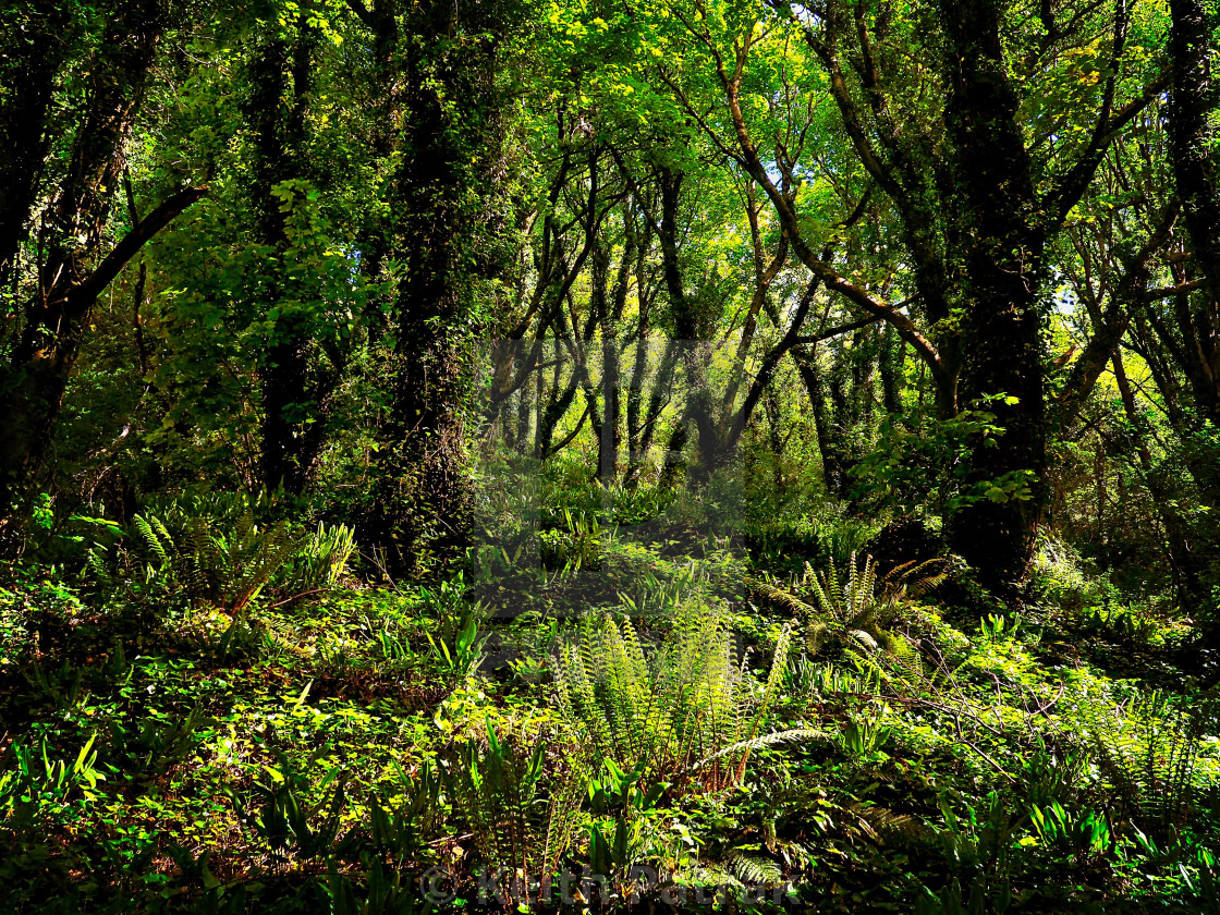 """""""Ferns In The Forest"""" stock image"""