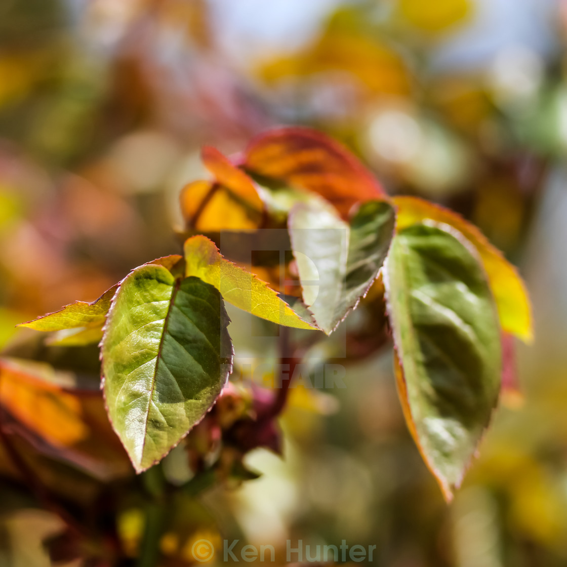 """Closeup of leaves on tree"" stock image"