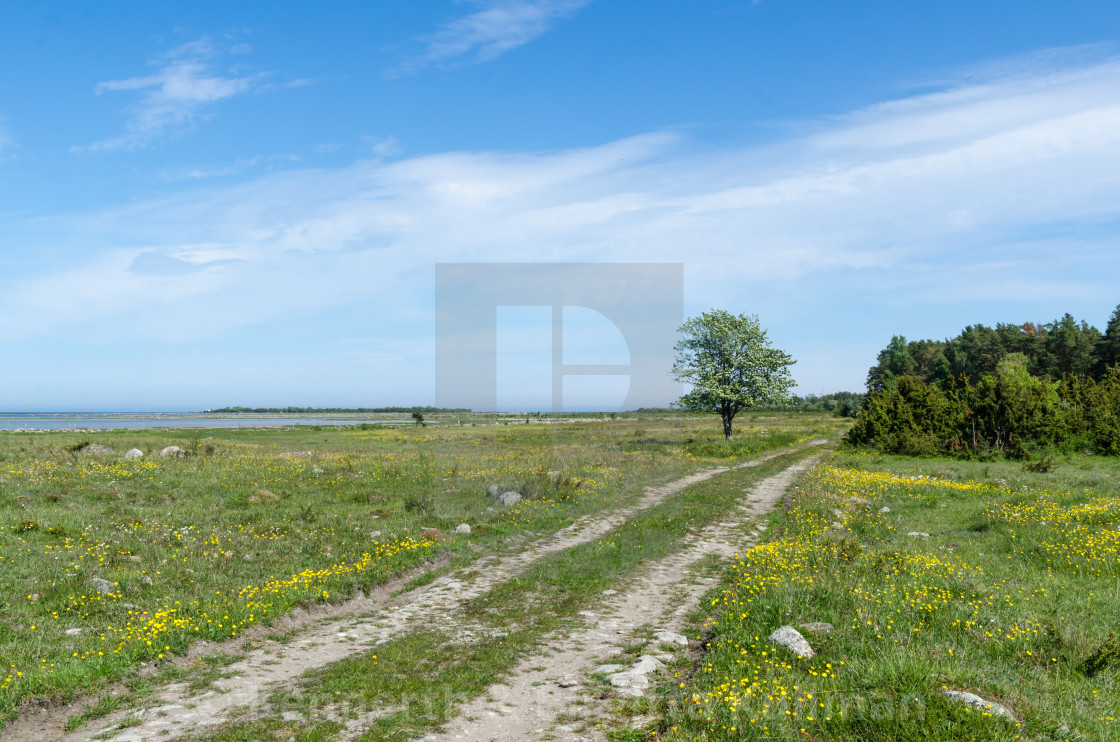"""Beautiful dirt road through a green grassland with lots of yello"" stock image"