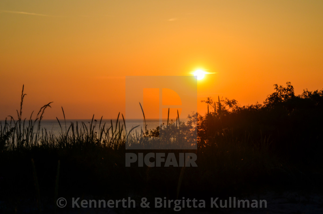 """Vegetation in front of a beautiful sunset by the beach"" stock image"