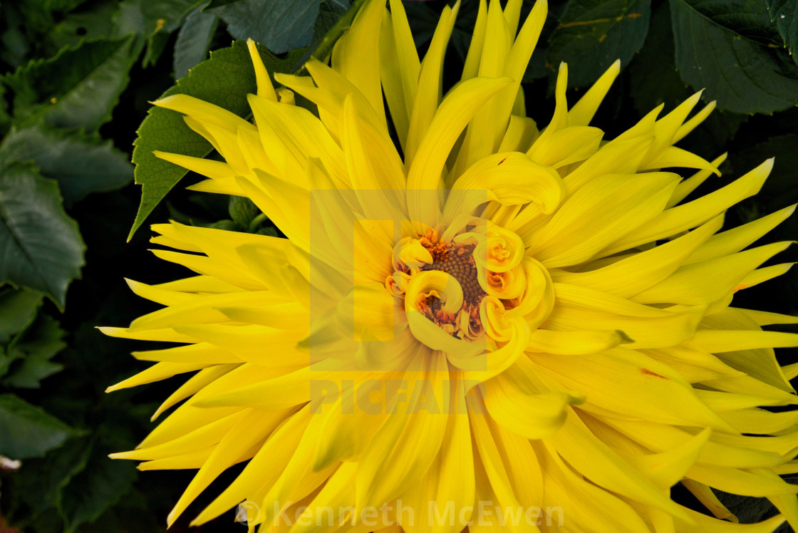 """Mellow Yellow"" stock image"