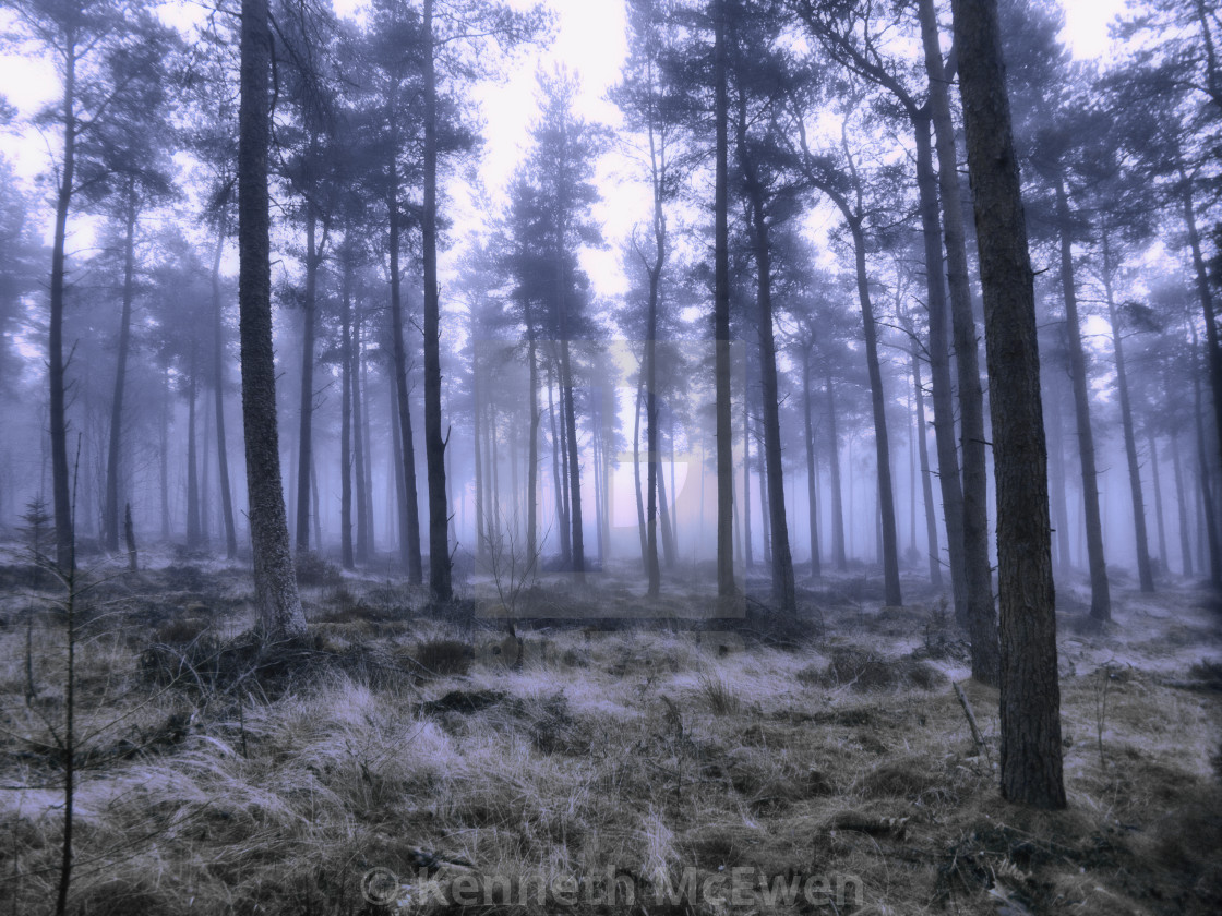 """Winter Chill in the forest"" stock image"