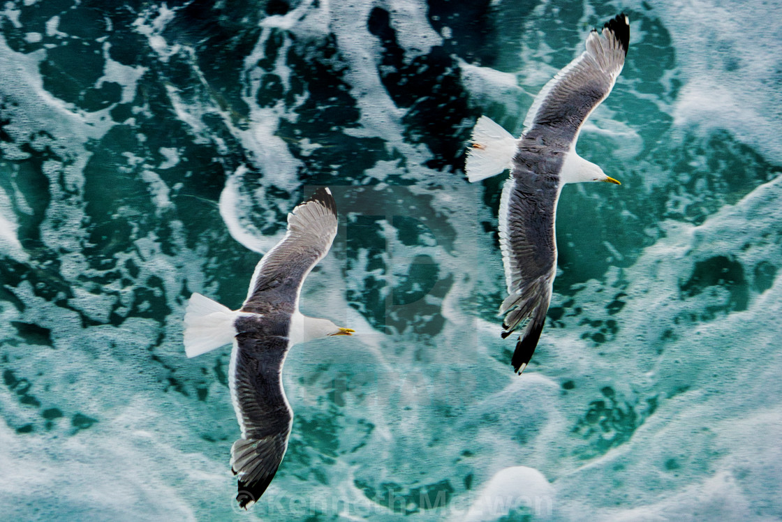 """""""An unusual view of gulls in Bay of Naples"""" stock image"""