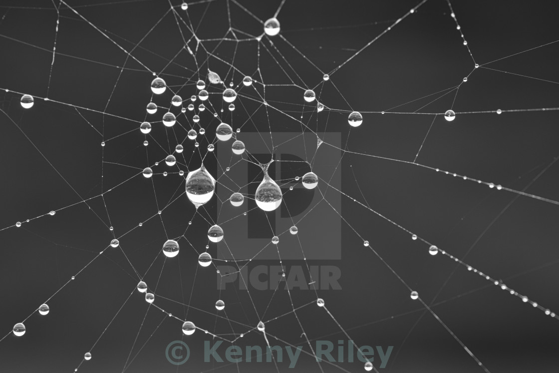 """Spiders Web"" stock image"
