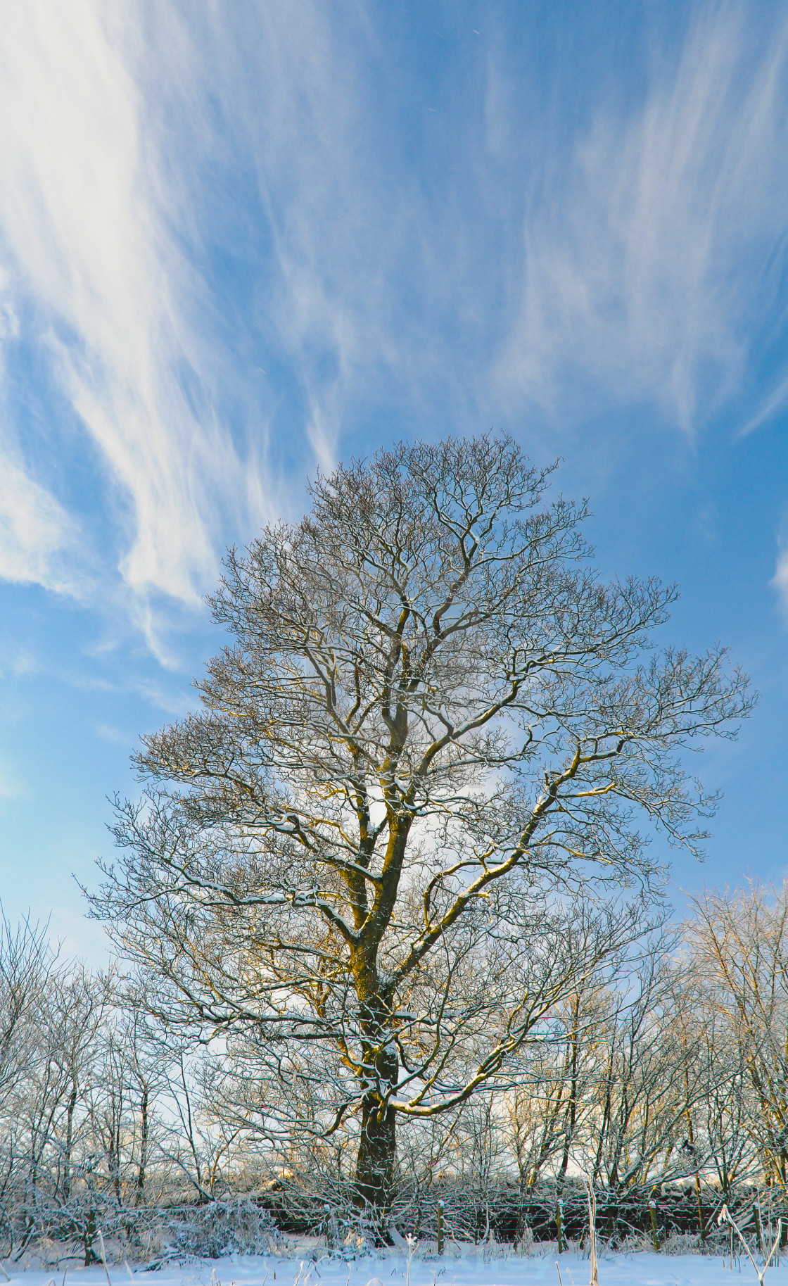 """""""A winters tree"""" stock image"""