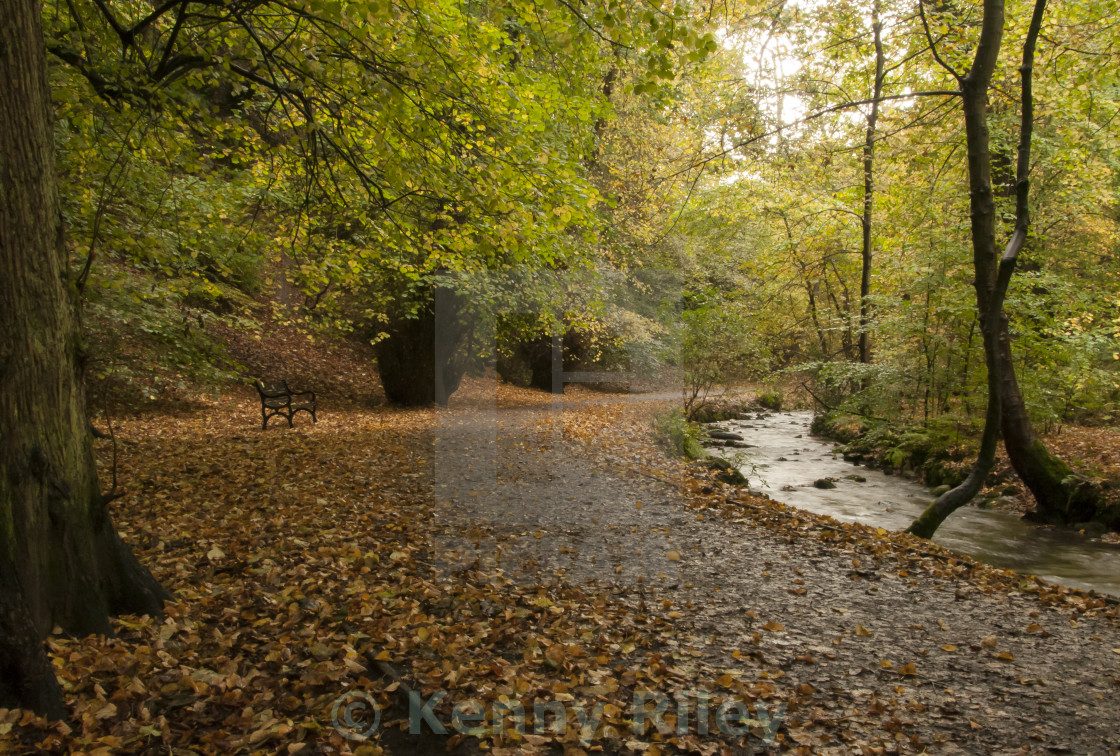 """Autumnal Woods"" stock image"