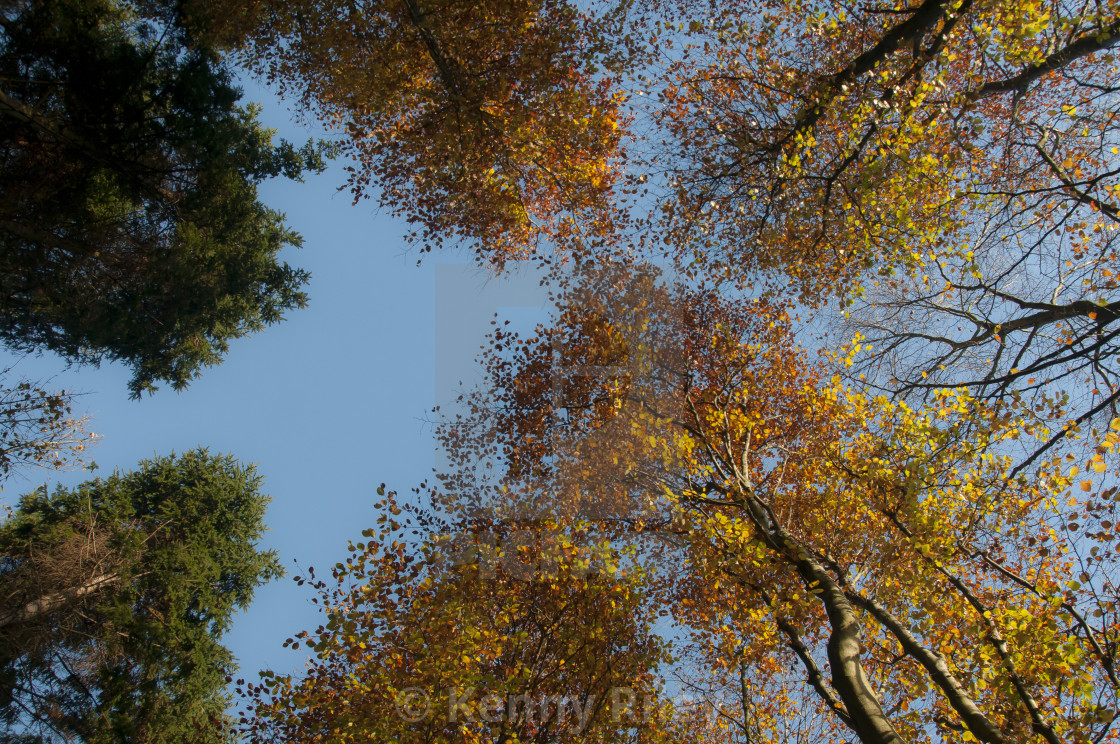 """""""The view from below"""" stock image"""