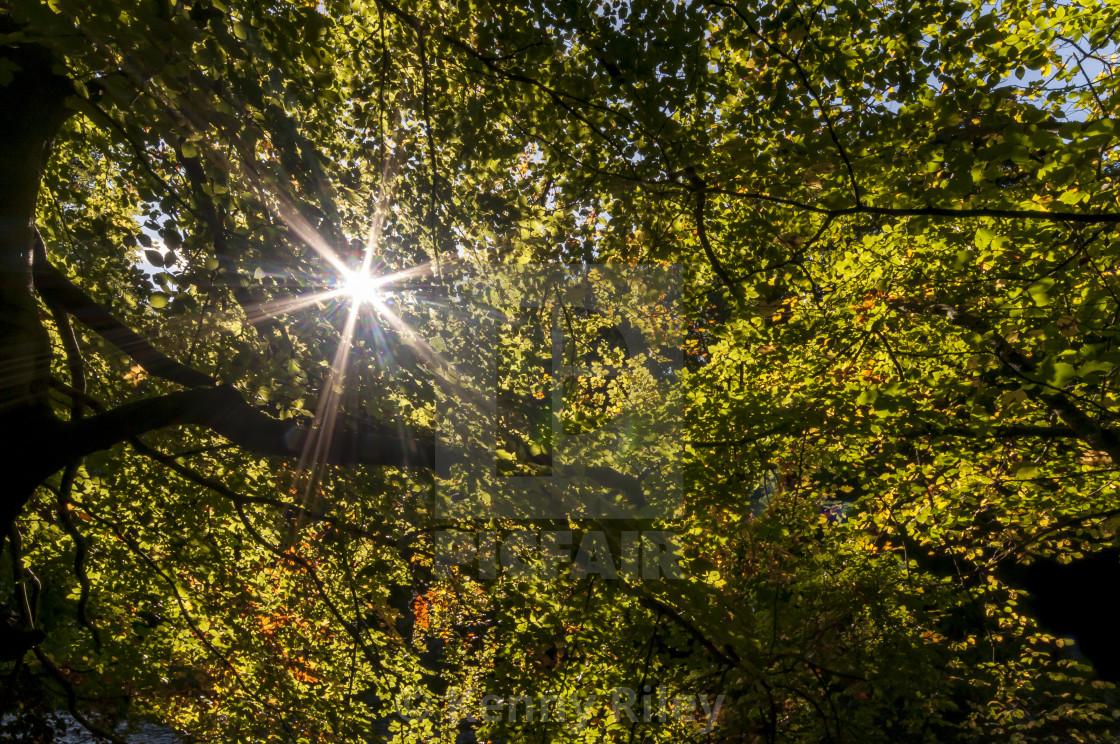 """""""Autumnal Starlight"""" stock image"""