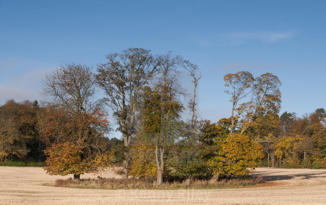 """""""Autumn Field."""" stock image"""