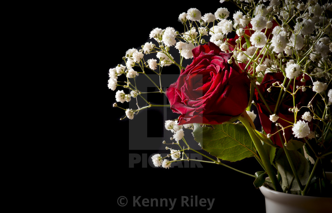 """The Red Rose"" stock image"