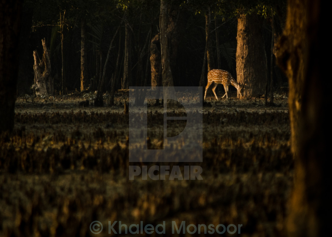 """Distant Deer"" stock image"