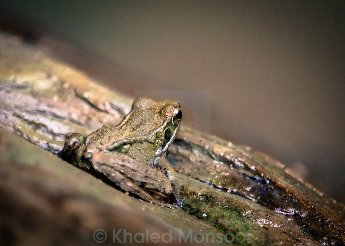 """a tiny frog"" stock image"