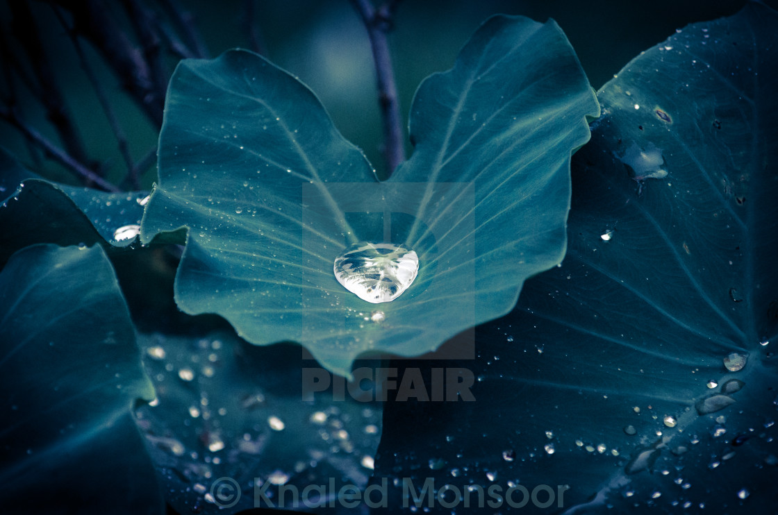 """Drop & the droplets"" stock image"