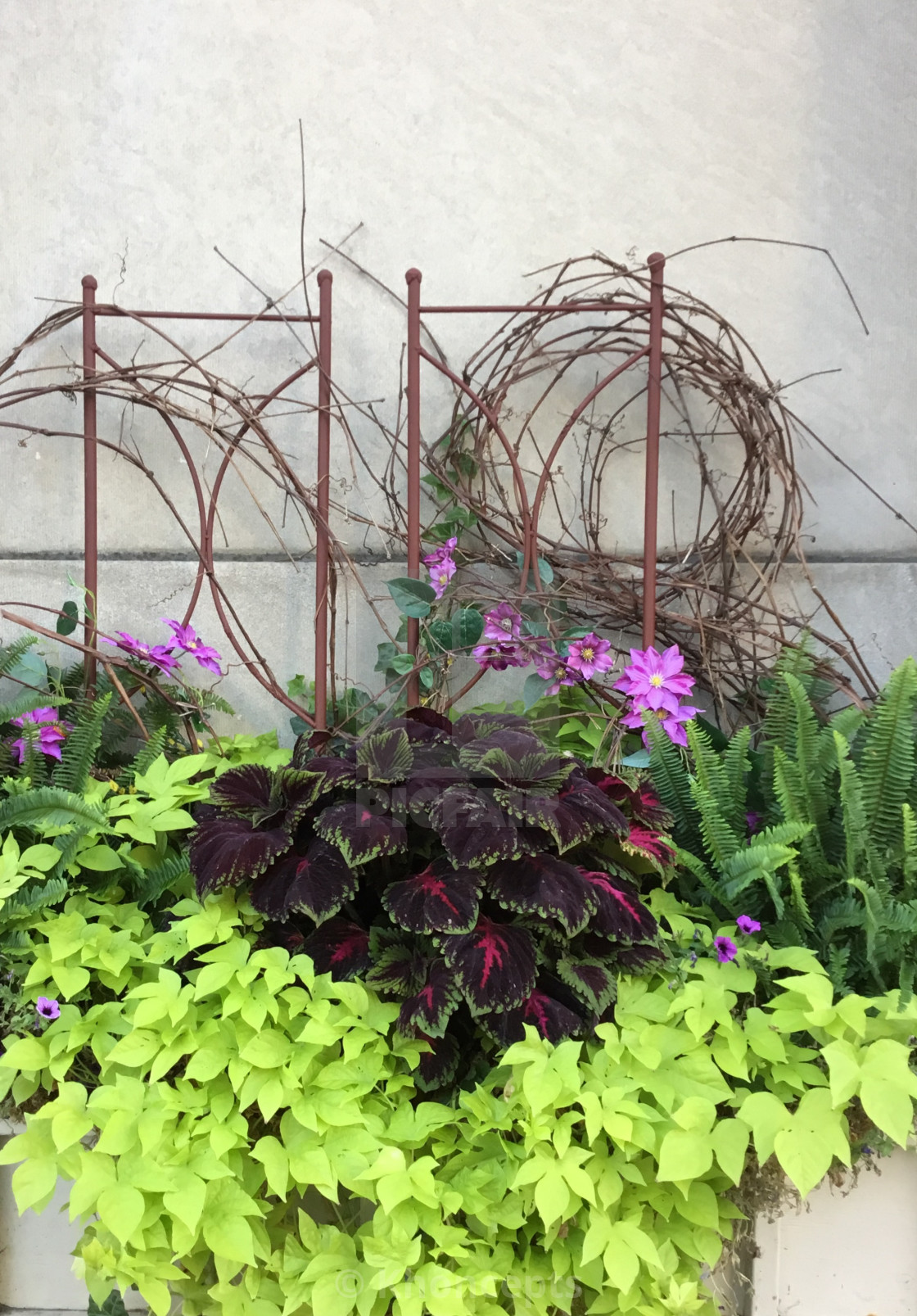 Planter with colorful  coleus