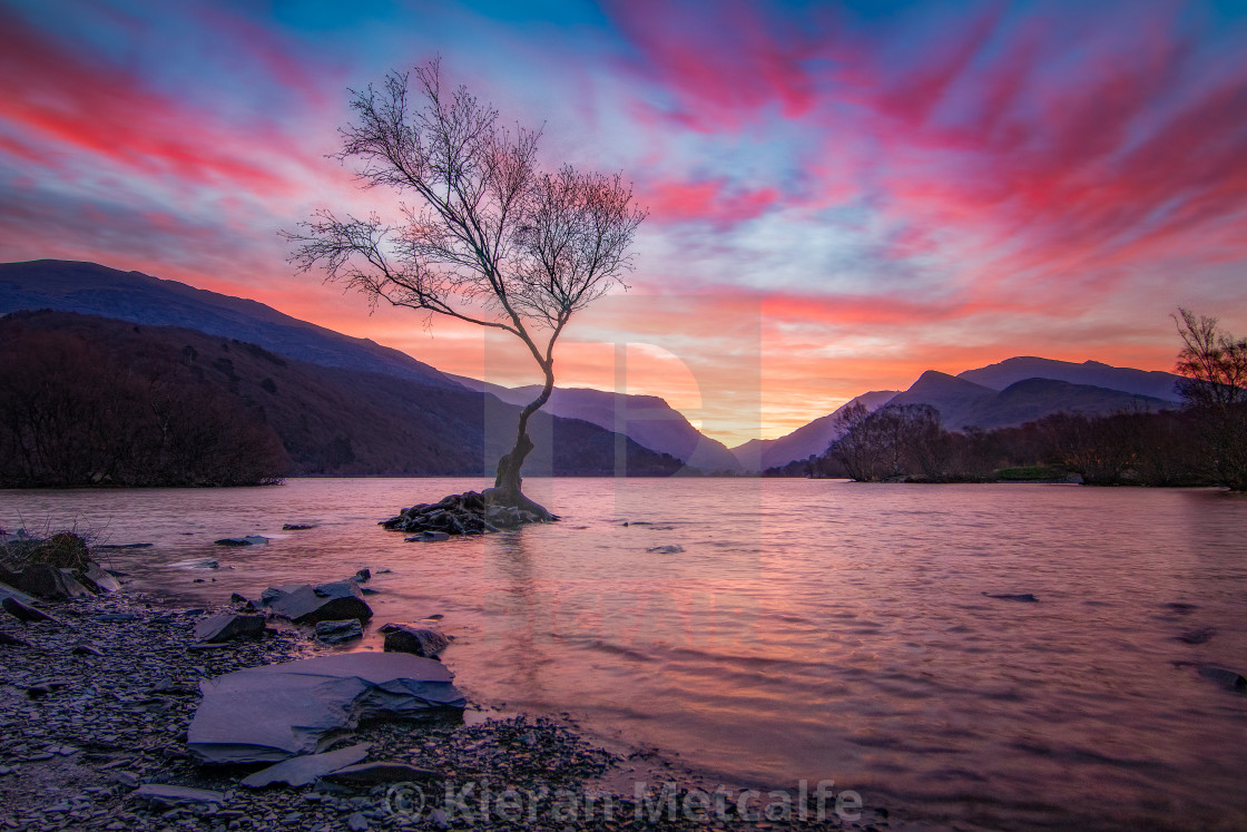 """Lone Tree at Dawn (Landscape)"" stock image"