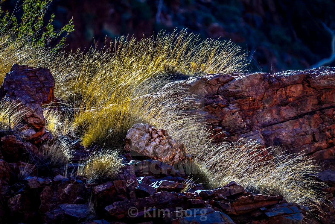 """""""Red Earth Grasses"""" stock image"""