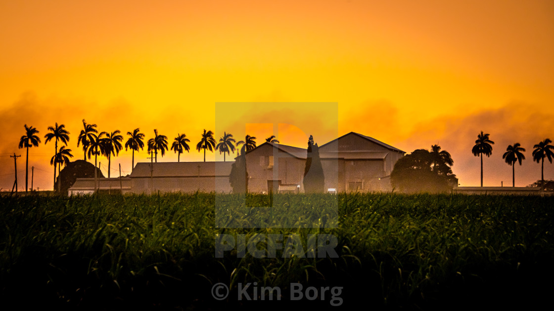 """Cane Fields at Sunset"" stock image"