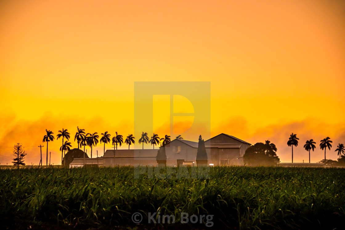 """Out in the Cane Fields"" stock image"