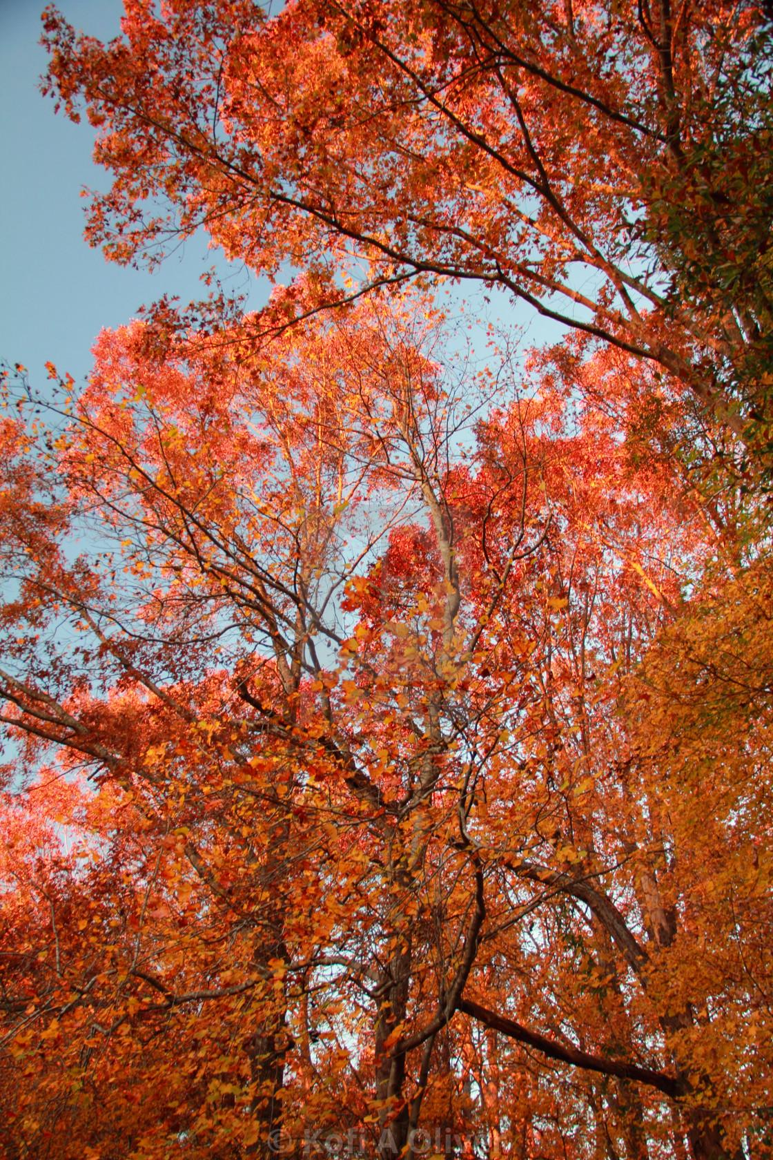 """Fall Foilage"" stock image"