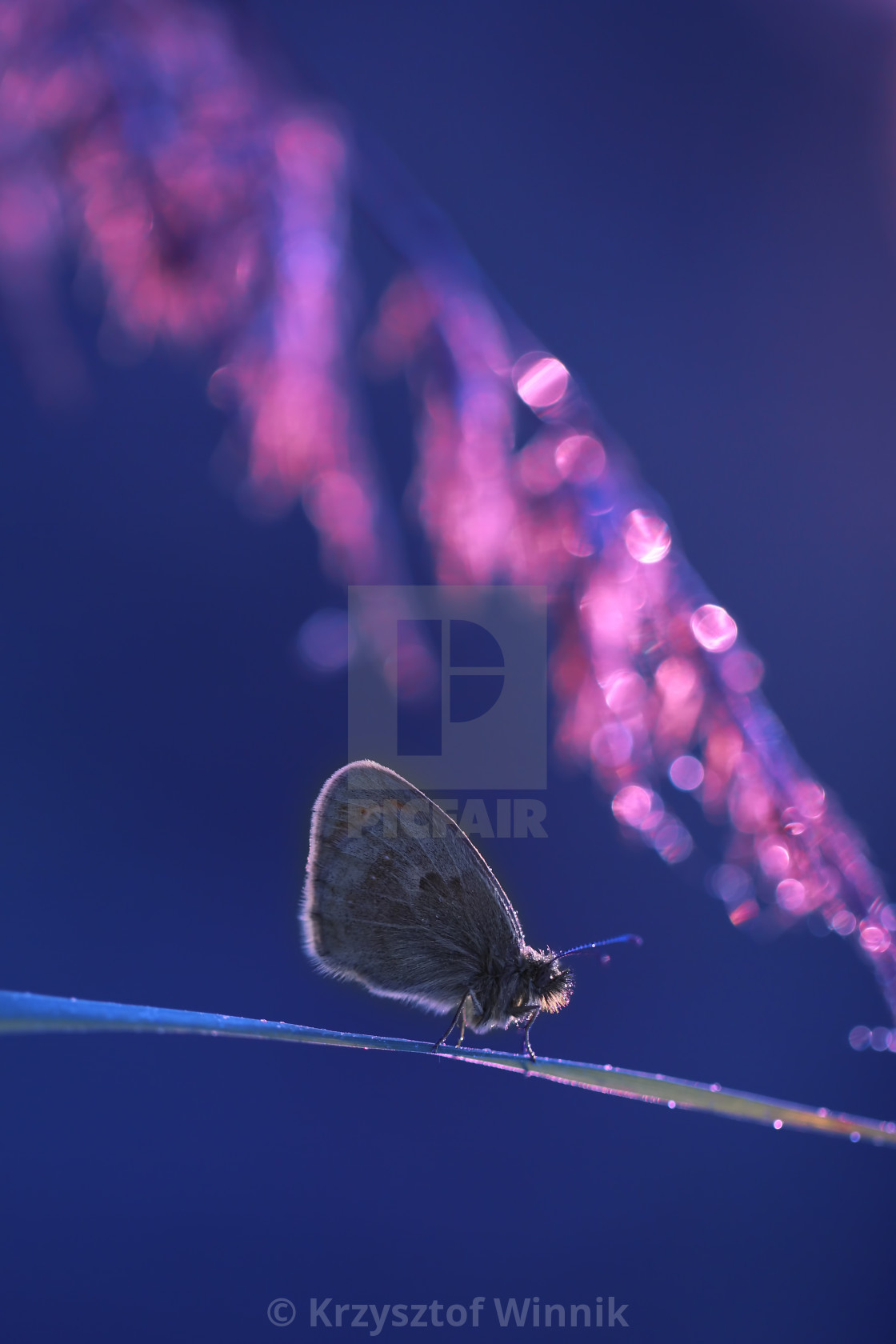"""A beautiful butterfly on an interesting background"" stock image"