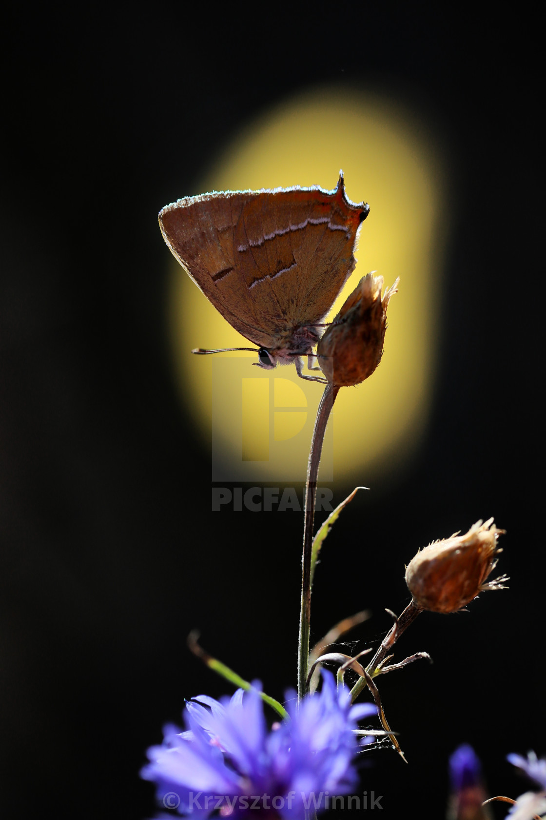 """A rare butterfly in my garden on an interesting background"" stock image"
