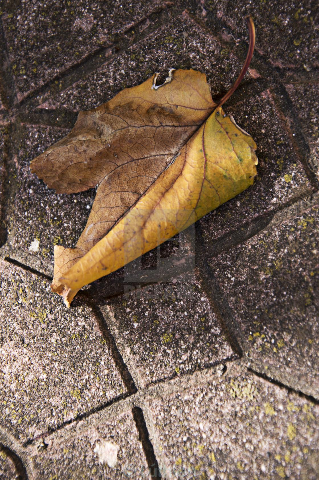 """Falling leaf"" stock image"
