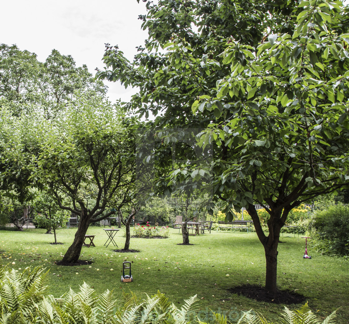 """courtyard with fruit trees"" stock image"