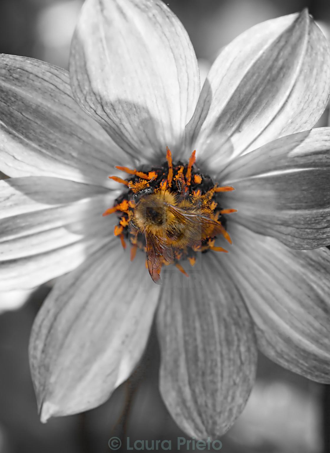 """Bee in orange"" stock image"