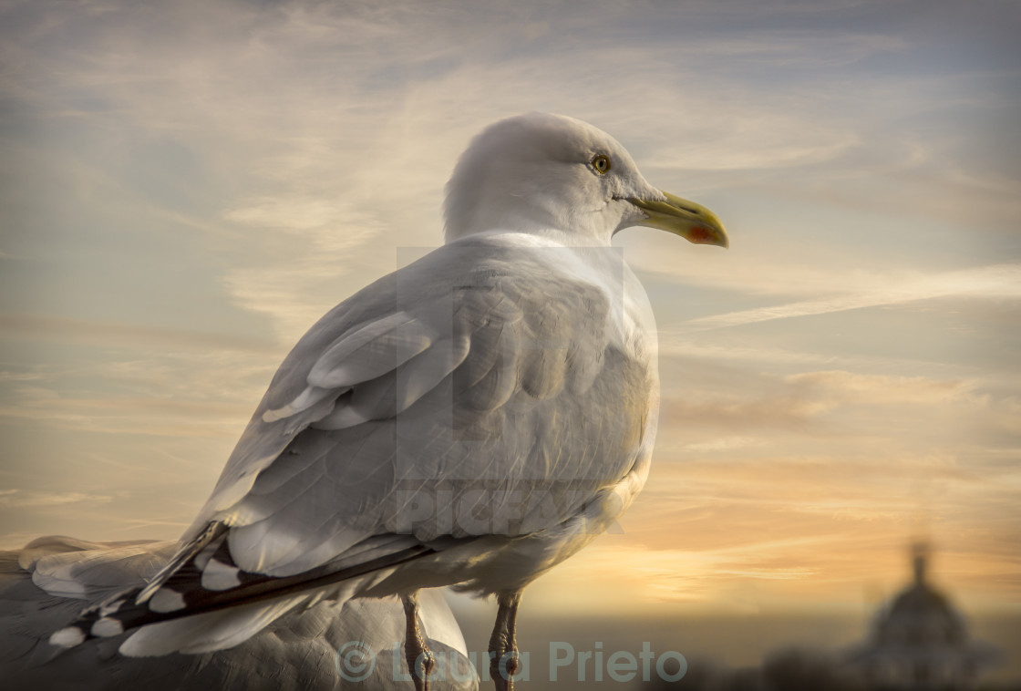 """""""From a seagull's point of view"""" stock image"""