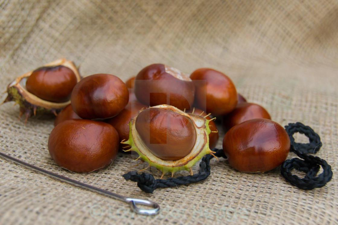 """Conker Time"" stock image"