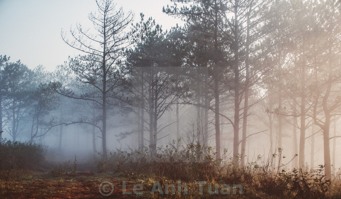 """""""The forest in sun light morning"""" stock image"""