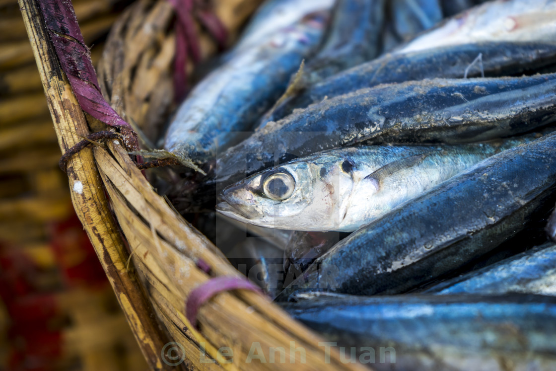 """""""The fresh fish in the basket"""" stock image"""