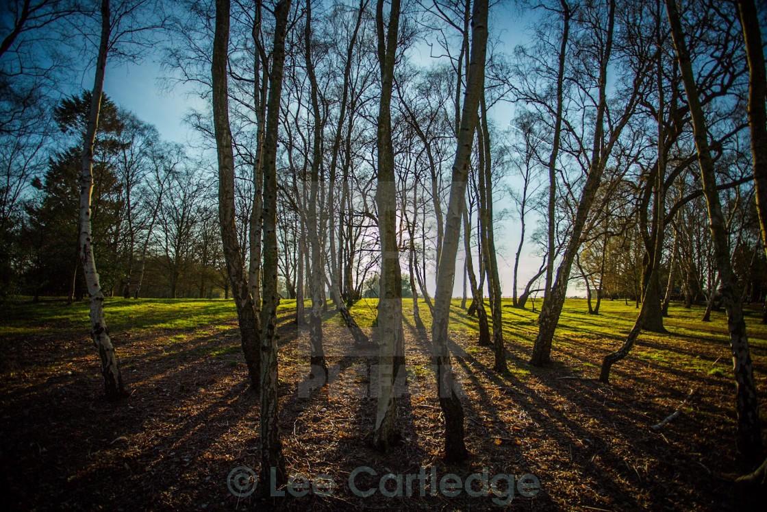 """Sun through the trees"" stock image"