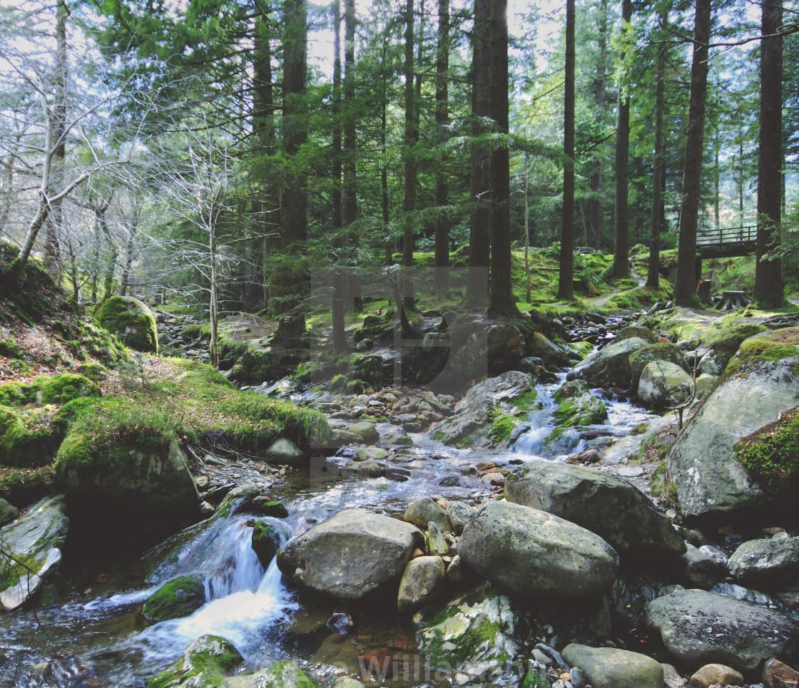 """Irish Forest Scene"" stock image"