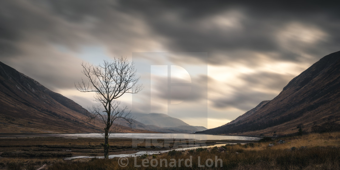 """Lone Tree at Loch Etive"" stock image"