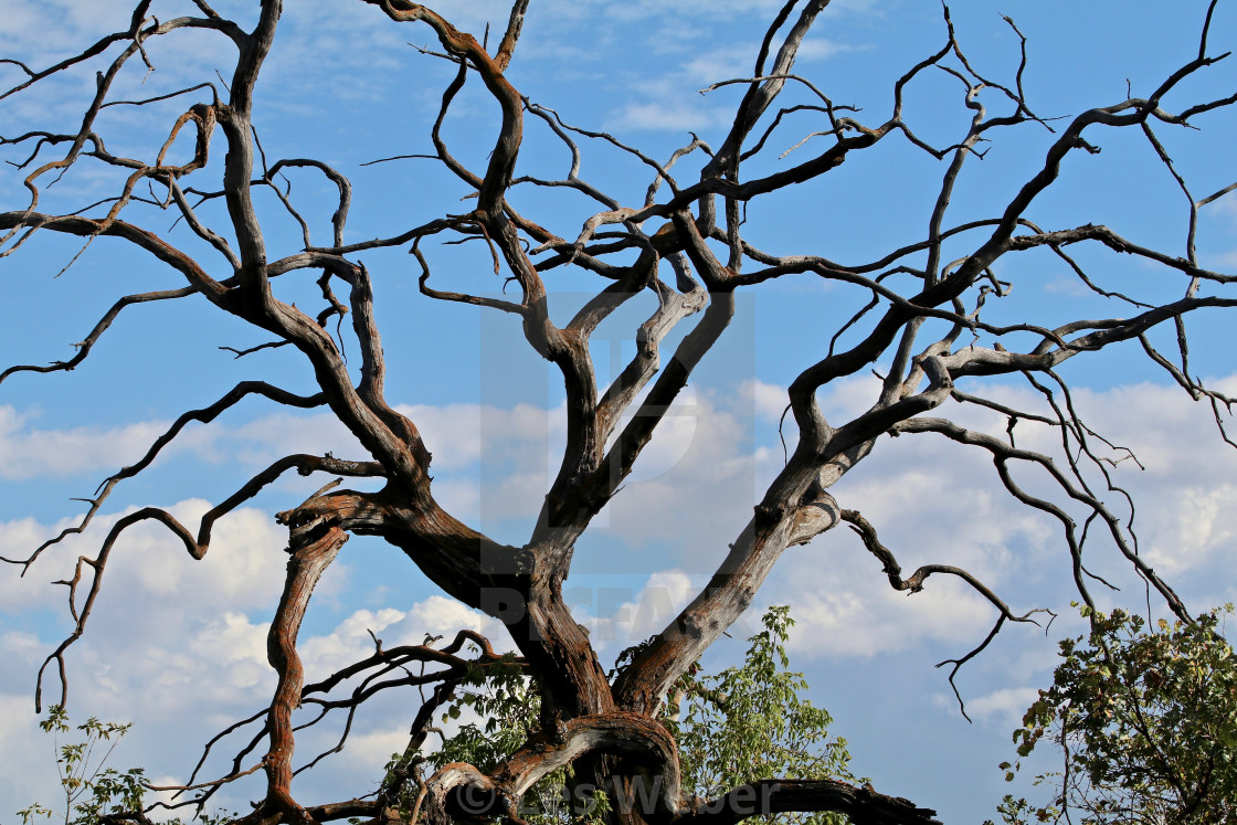 """Craggy Tree"" stock image"