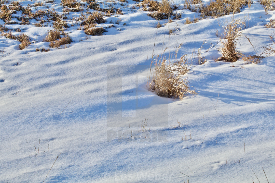 """Snowy Prairie Grass Shadows"" stock image"