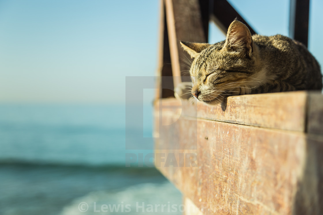 """Sleeping Cat"" stock image"