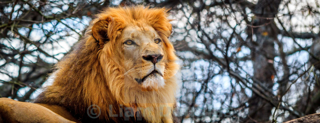 """""""It's Good to be King"""" stock image"""