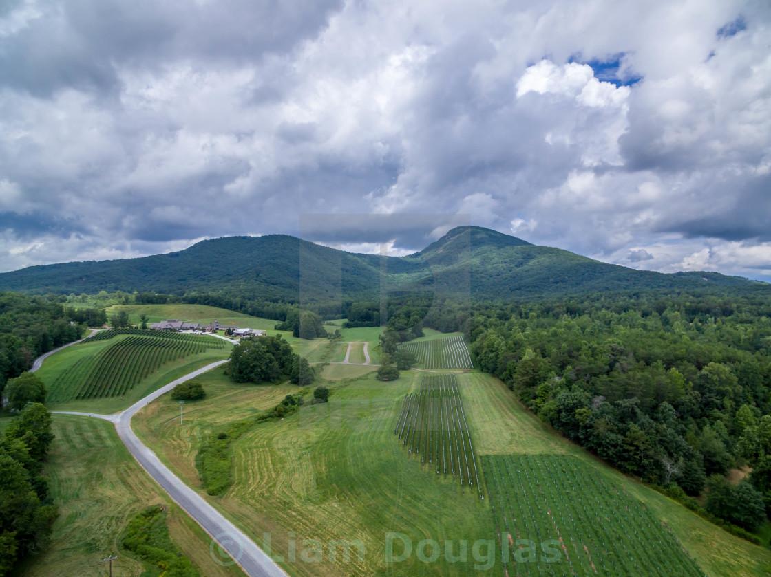 """""""Yonah Mountain & Vineyard"""" stock image"""