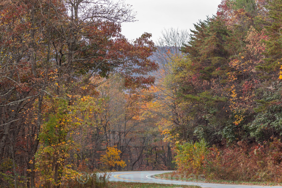 """""""A road winding through fall colors"""" stock image"""