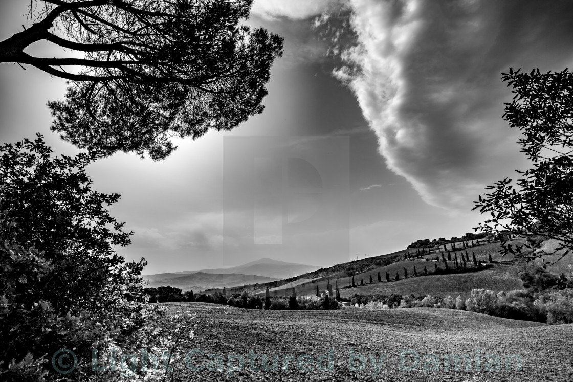 """Tuscany landscape in black and white."" stock image"