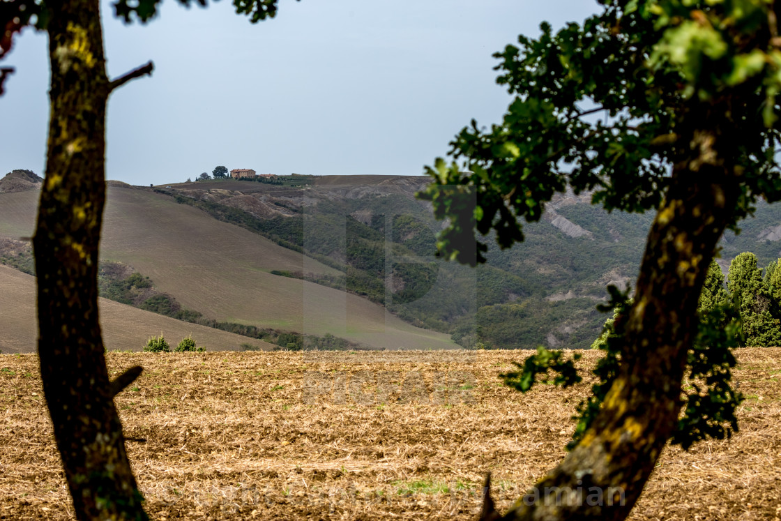 """""""Field, mountain and small house visible between trees"""" stock image"""