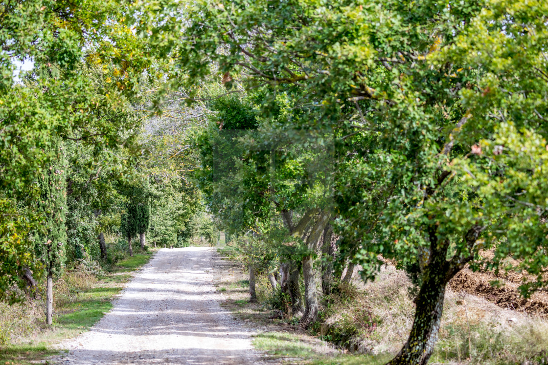 """""""Lonely gravel road"""" stock image"""