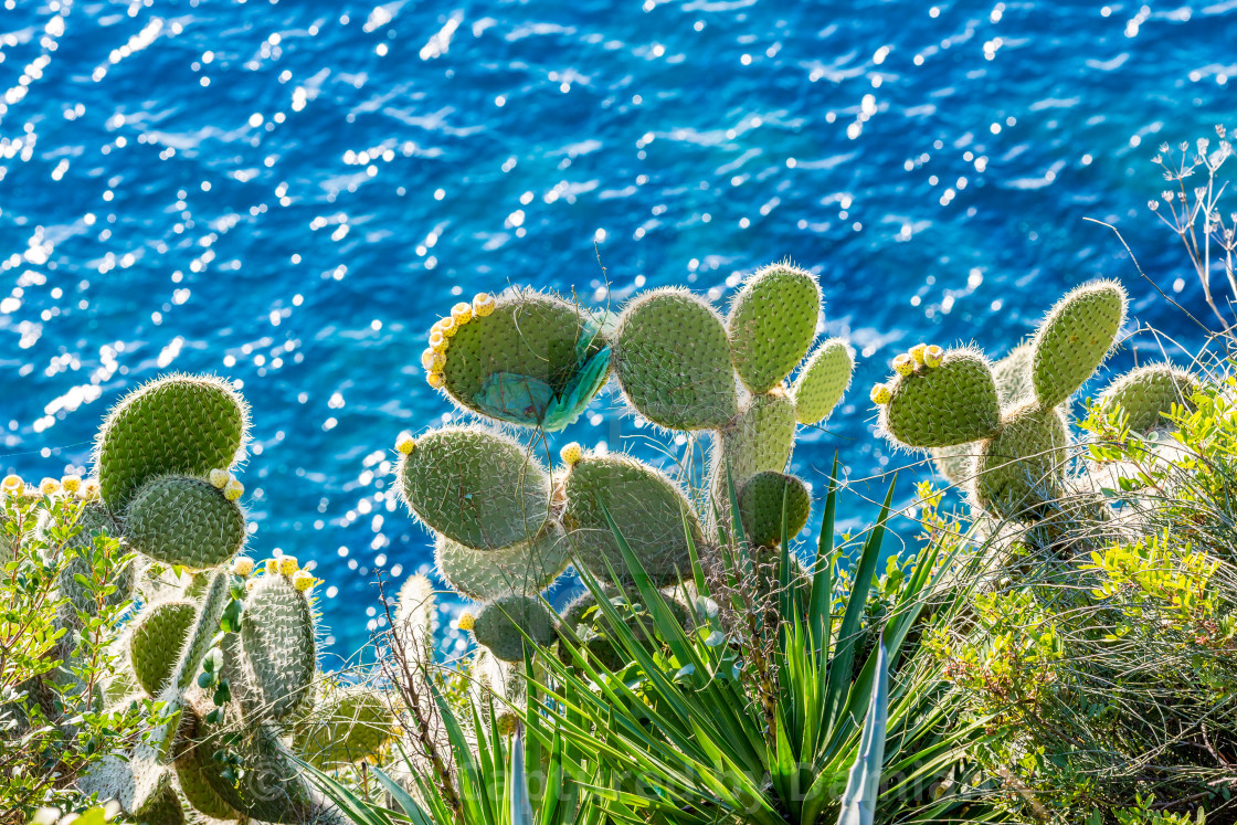"""Cactuses at the Dubrovnik coast with plastic bag"" stock image"