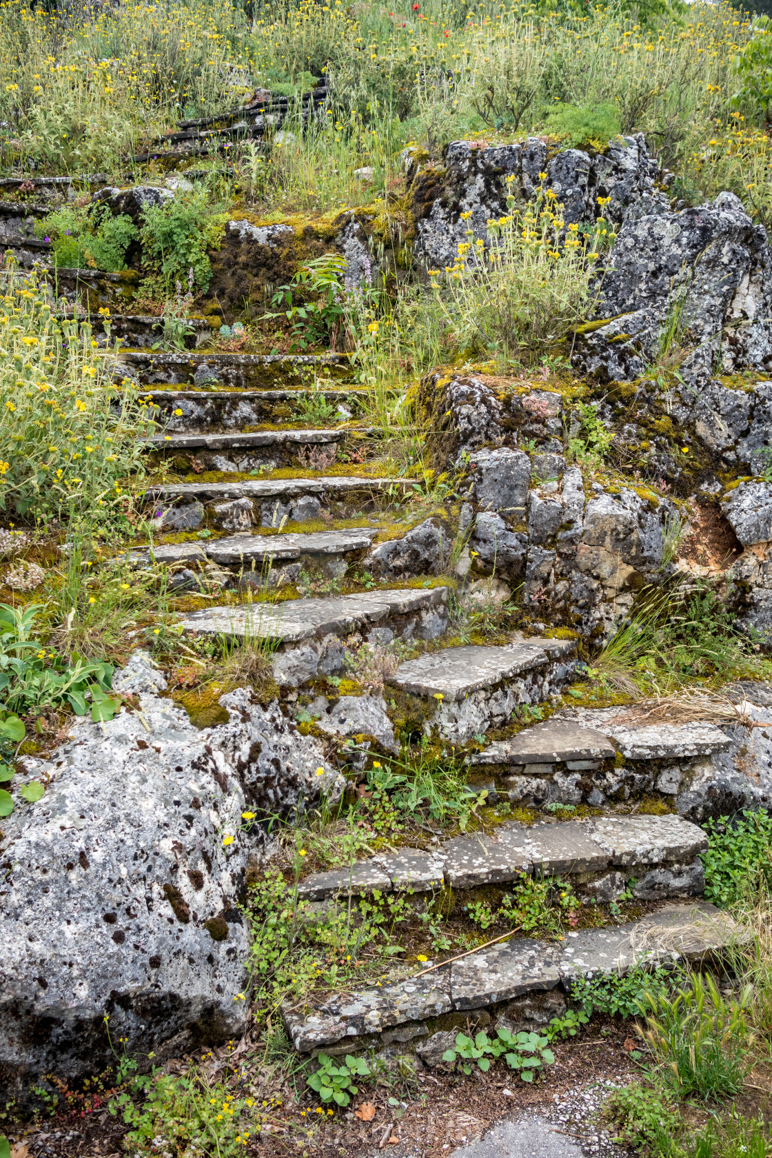 """Stone stairs overgrown with wild herbs and grass"" stock image"