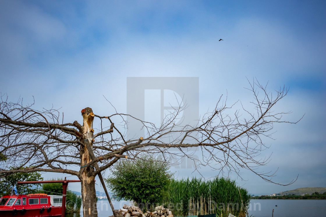 """Leafless dead dry tree, Ioannina Island, Greece"" stock image"