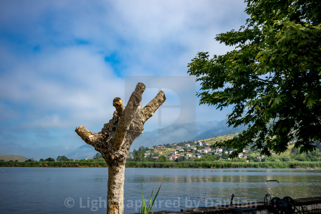 """Branchless dry tree, Ioannina Island, Greece"" stock image"