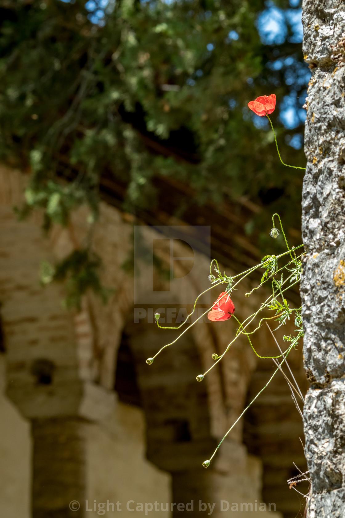 """Poppy, Aslan Pasha Mosque in Ioannina, Greece"" stock image"